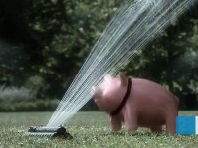 2009-csob-piggy