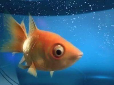 2010-radio-expres-fish